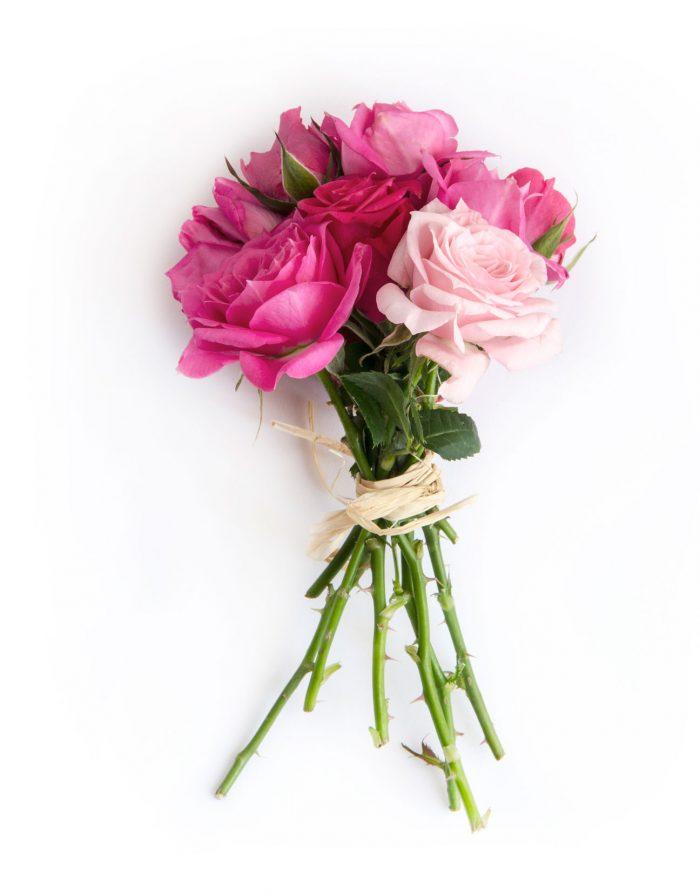 rosas-somos